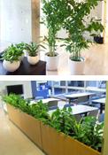 観葉植物リース