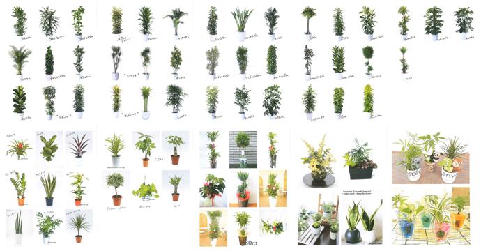 観葉植物リスト